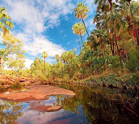 Palm Valley, NT