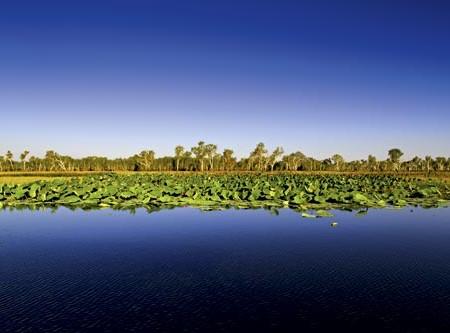 KAKADU TRAVEL: YELLOW WATER WETLAND