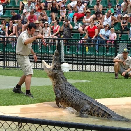 A crocodile show at Australia Zoo.