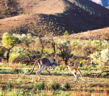 The northern Flinders Ranges are simply spectacular and the four-wheel driving is some of the best w