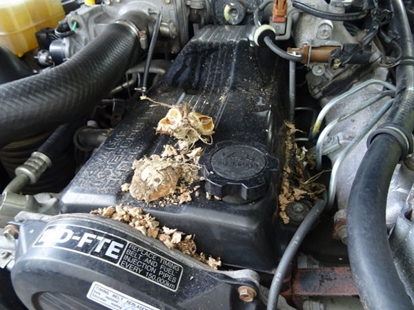 Have you had problems with rats chewing your electrical wiring or nesting under the vehicle bonnet?