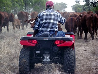 man sitting on a tractor hearding cows