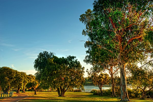 Yanchep National Park is less than an hour's drive from the Perth CBD.