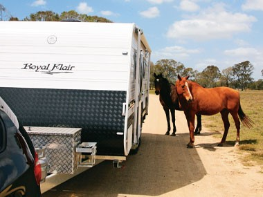 The Royal Flair Aussiemate and some royally curious horses.