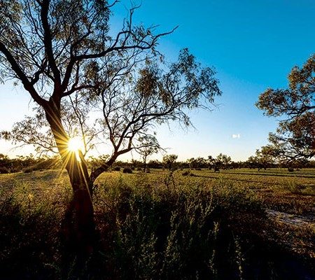 Menindee is a haven of historical sites, pristine riverside camping and wildlife.