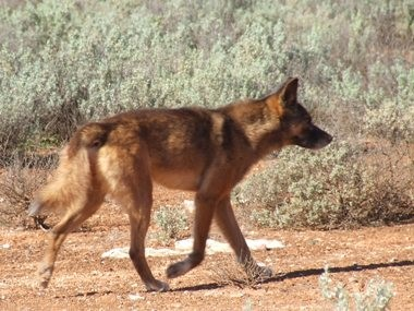 News: wildlife encounters