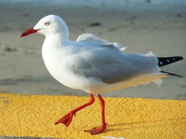 Warning: avoid seagull droppings