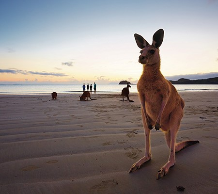 Hang with the kangaroos in Cape Hillsborough National Park