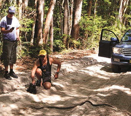 Here I am, playing with my phone when I should be admiring the python crossing the sandy track