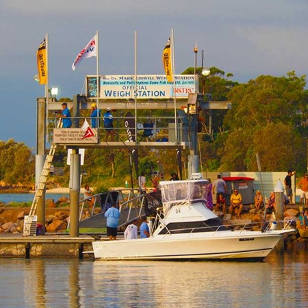 Nearly 600 fishing boats contested the 2016 Garmin / Sylvania Marina Billfish Shootout in Port Steph