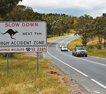 It's vital you reduce your speed when driving at night to avoid hitting wildlife