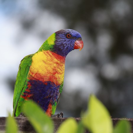 Birdwatching Bible