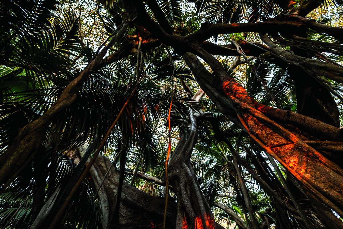 Tropical forest on Lord Howe